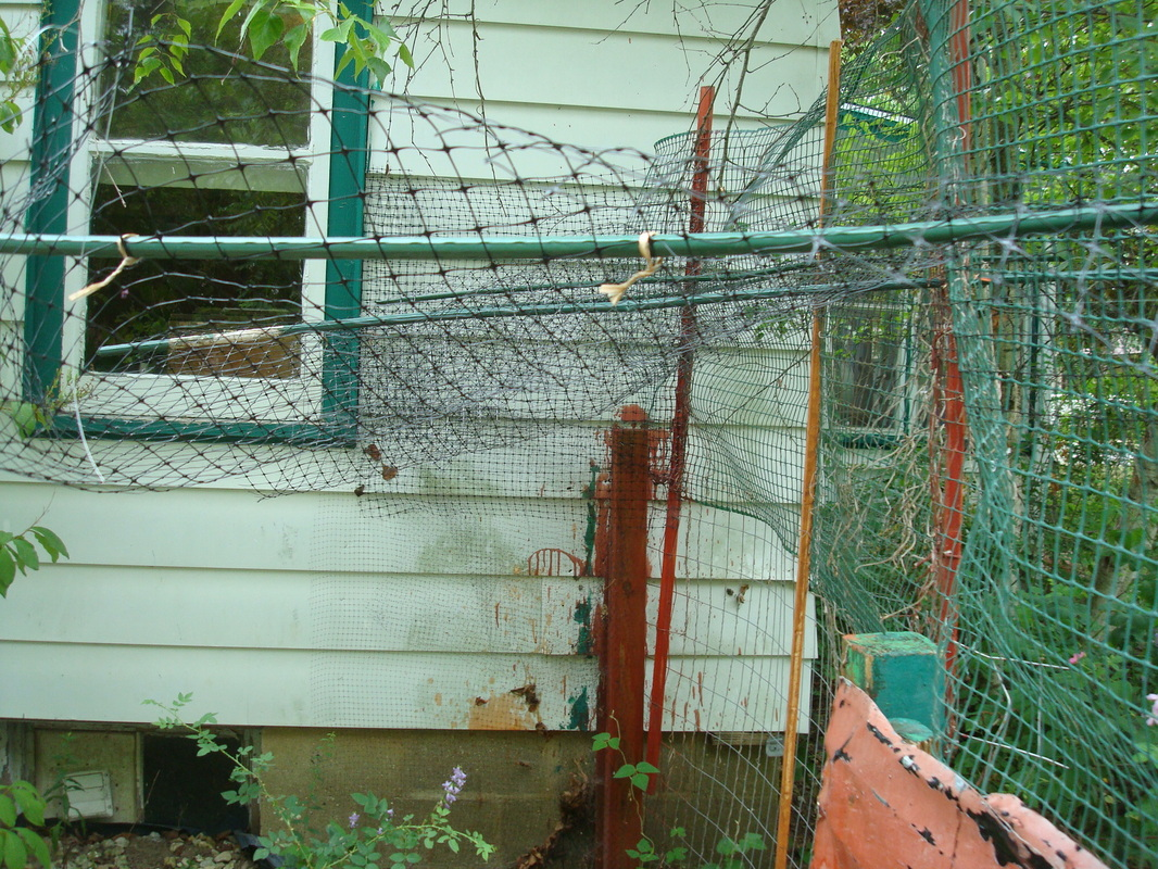 Do it yourself cat fence wi info